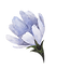 Blue%20Flower_edited.png