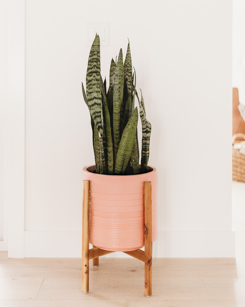 A snake plant in a blush pink plant pot on a wooden stand.