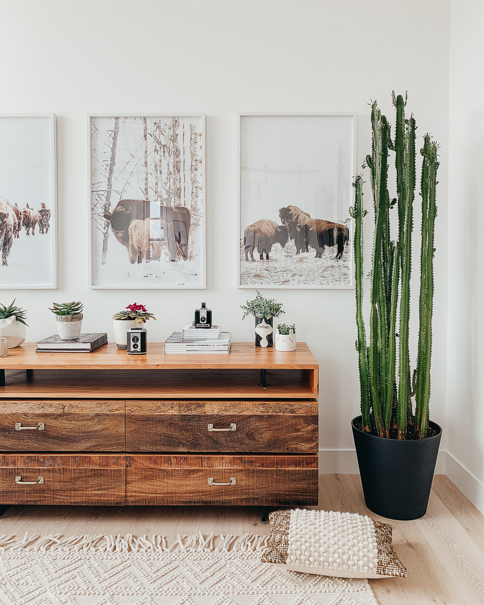 A large milk cactus in a black pot next to a wooden dresser below three buffalo photographs.