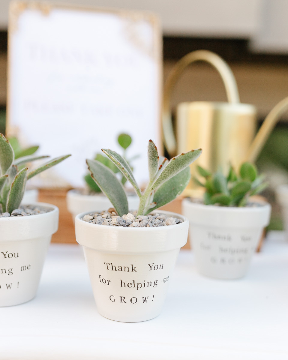 A few pots of succulents used as favours at a first birthday party.