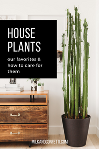A guide to taking care of house plants.