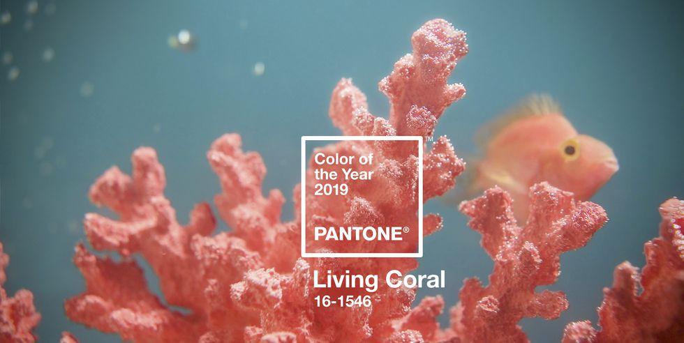pantone color 2019 living coral