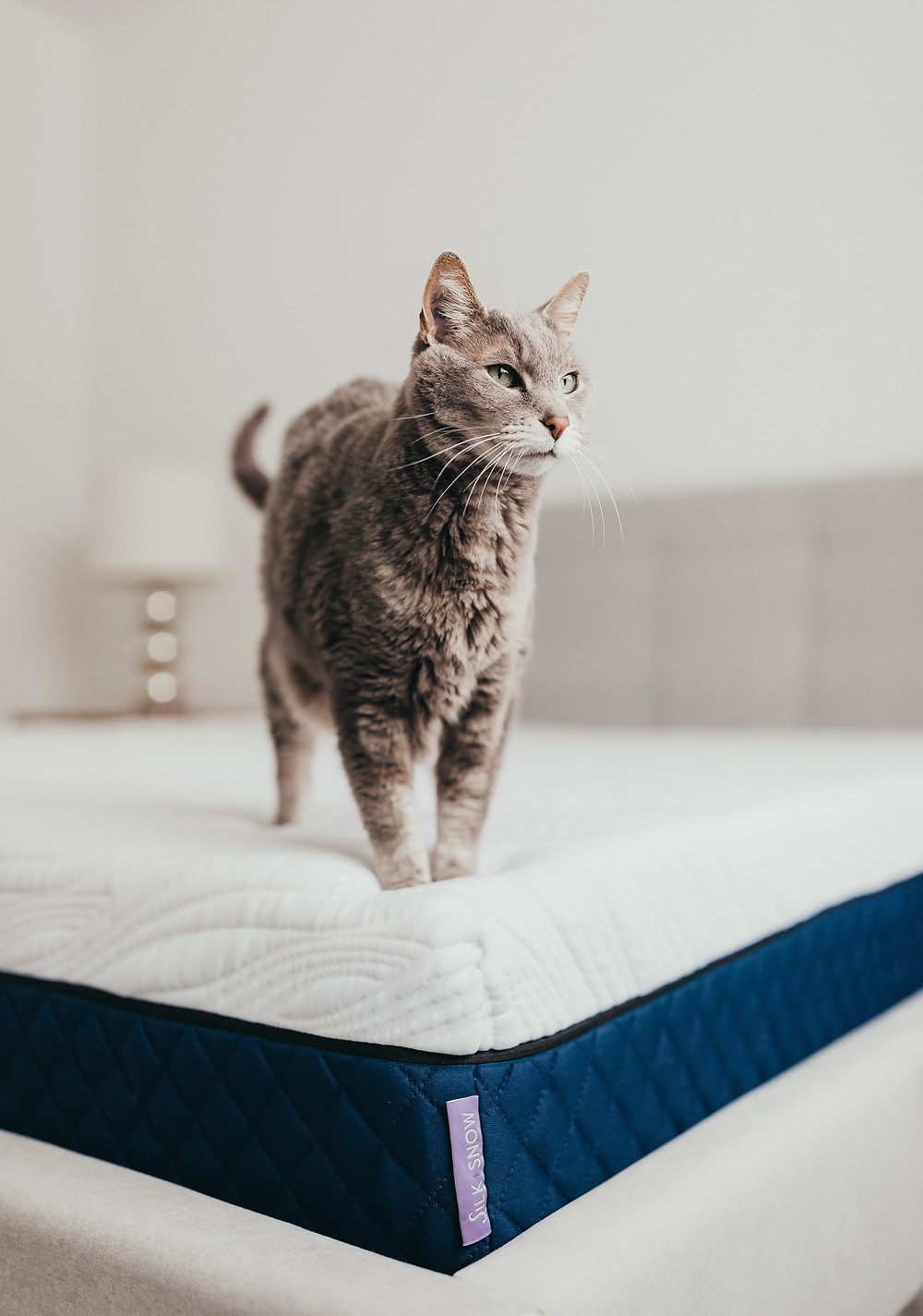 A grey cat standing on a white  silk and snow mattress