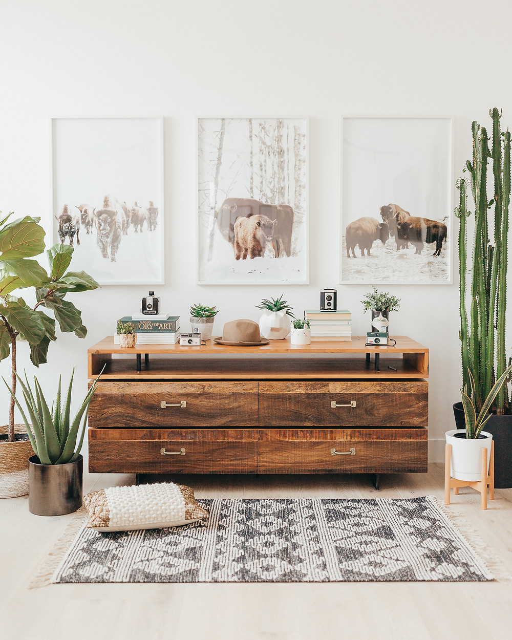 Wood console table under three framed pictures of bison fiddle leaf plant in woven basket aloe plant in pot on floor cactus in corner snake plant in white pot with wood stand on floor patterned area rug natural wood floors