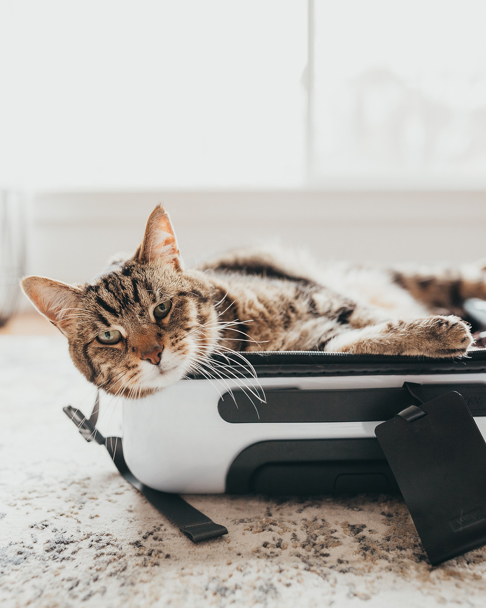 A cute tabby cat laying in a white suitcase.