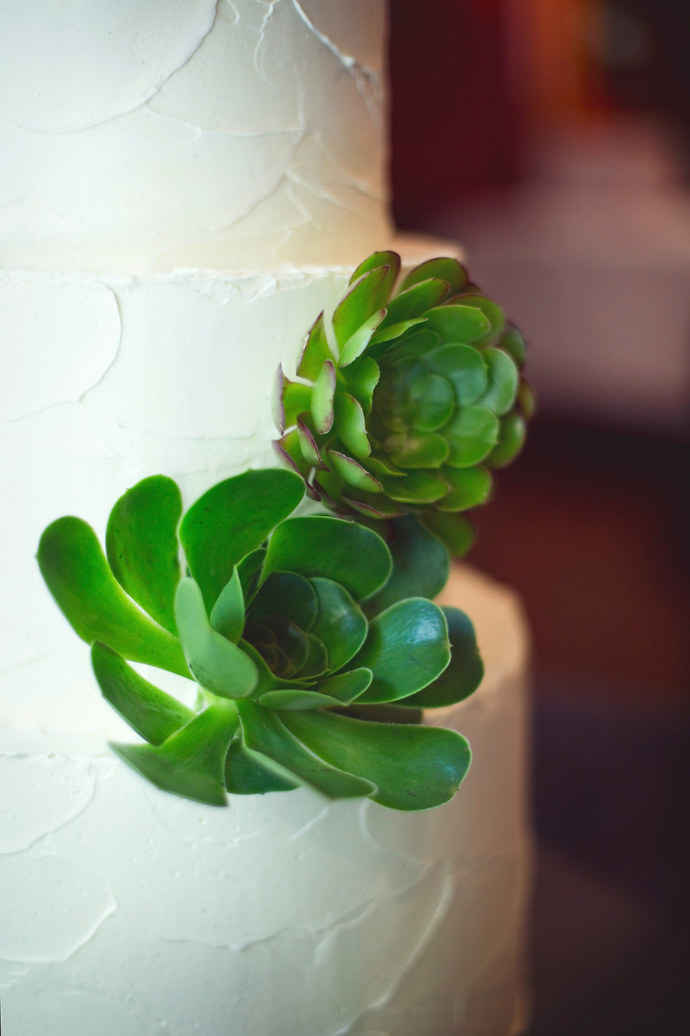A close up shot of some green succulents on a white wedding cake at an Italian inspired wedding.