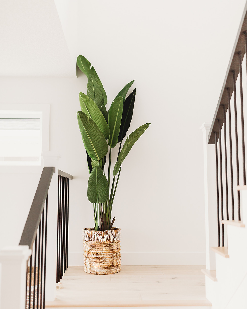 Bird of paradise plant on steps natural wood floor woven basket white posts wood accent handrail