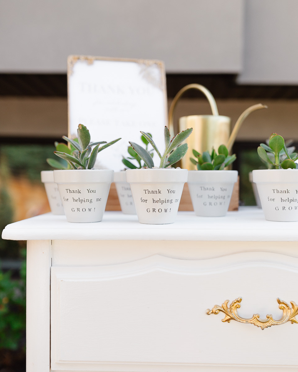 A group of little succulents in white pots on a dresser as the favours at a first birthday party.