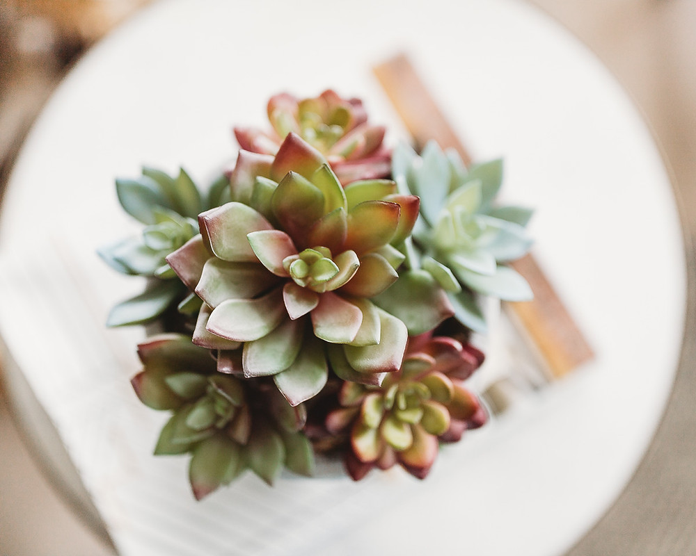 A succulent plant in a white pot on the table.