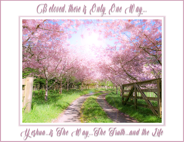 pink dogwood path.png