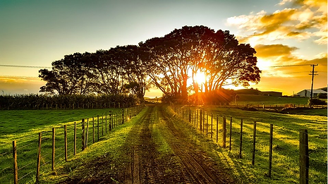 new zealand sunset.png