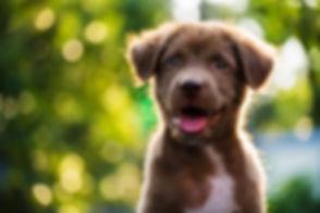puppy image eli.jpeg