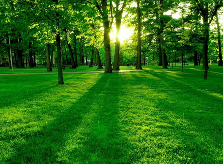 Picture Perfect Green Grass