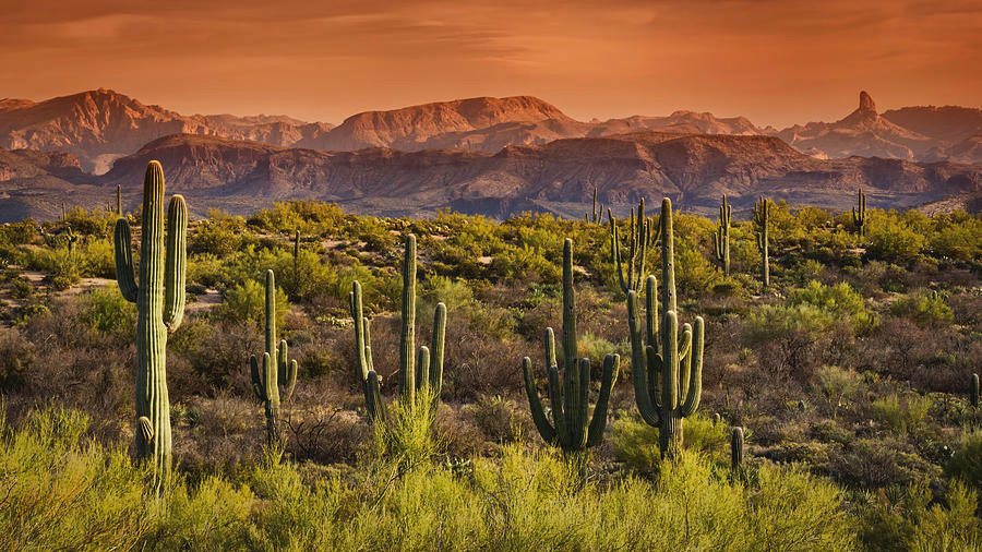 a-beautiful-desert-evening-in-the-sonora