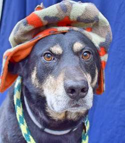 winter hat 2