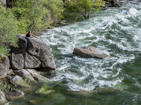 Fitness and Self-treatment at the Yuba River