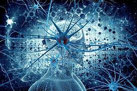 מוח נוירונים.jpg