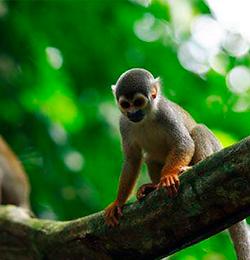 Amazonas 0003.png