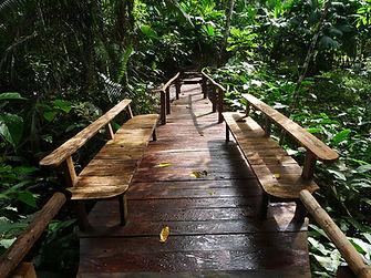 Amazonas 01.jpg