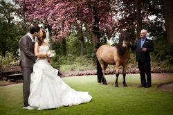 Kasteel Henkenshage Sint-Oedenrode Bruidsreportage (78 of 121)