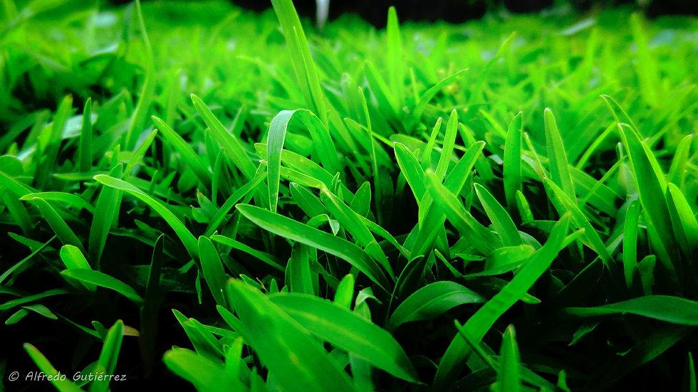 Grass_2_2048x1152.jpg
