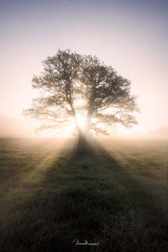 fogtree4n.jpg
