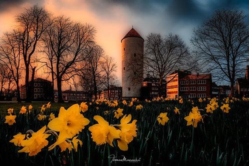 Buddenturm im Frühling