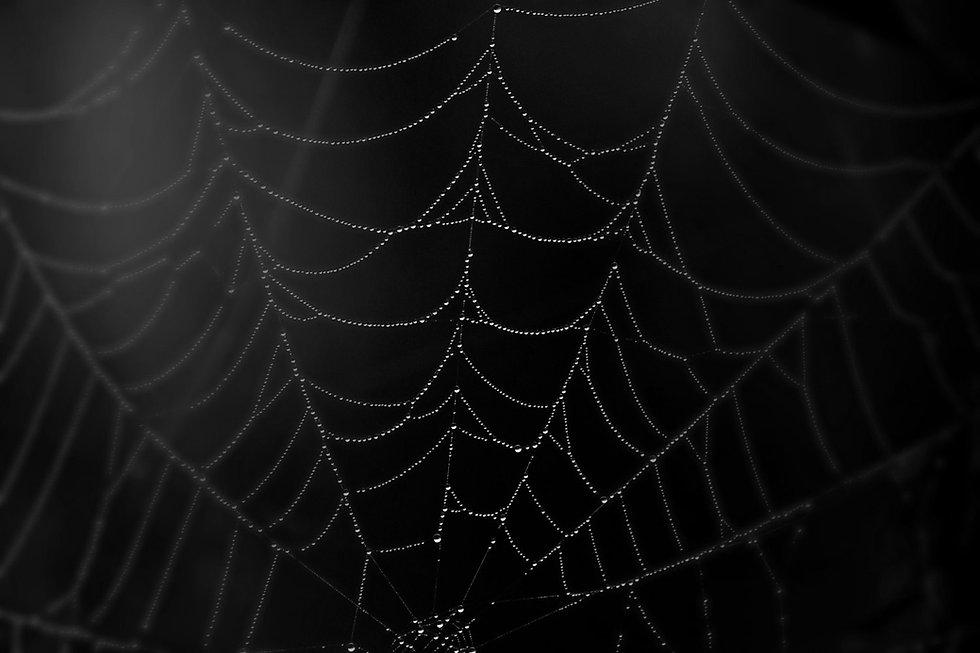 web 2 bw