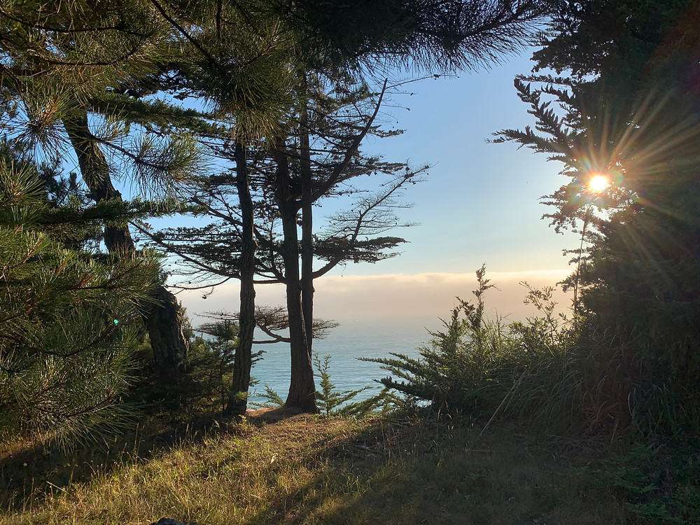 A sea cliff with several cypress trees in the foreground frame the fog and blue ocean off in the background. Through the trees branches, the warm summer sun sets in the Northwest, casting rays upon all the plants and trees.