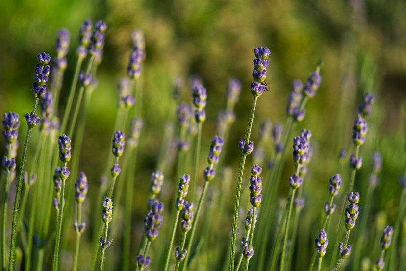 canva-wild-flowers-growing-in-field-MAEG