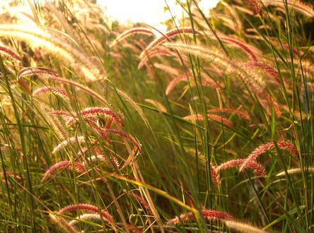Plantas autóctonas del humedal