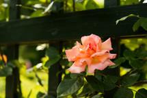 Flores del delta