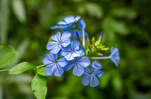 Flora del Delta