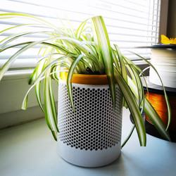 kvetináč pre zdravší vzduch