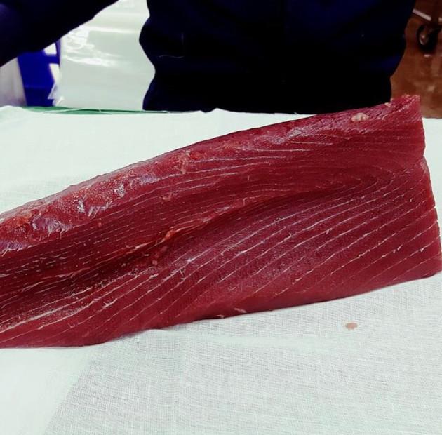 Sashimi tuna chainless