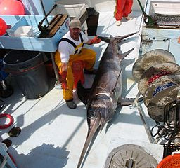 First quota of swordfish in the Mediterranean