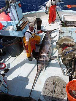 Swordfish catch