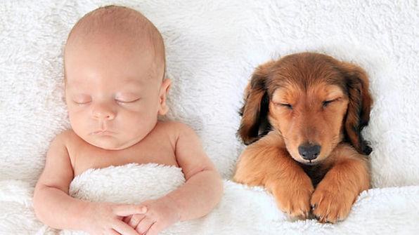 Bir-Hayvan-ile-Uyuyarak-Uykunun-En-Tatlı