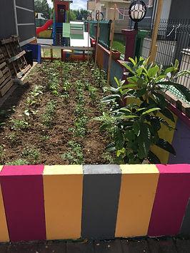 organik bahçe.jpg