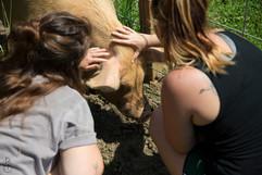 Visitors petting Preston