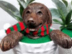 Dog in Plant.jpg