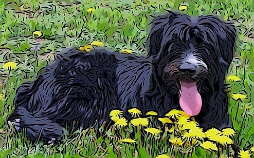 Watson_wild_flowers_edited.jpg