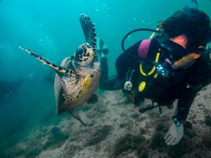 Ilhabela é a capital nacional do ecoturismo e turismo de aventura em agosto