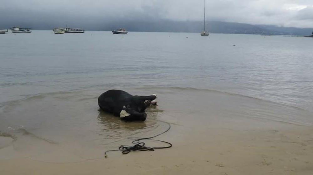 Não há informação sobre quanto tempo o animal ficou no mar (Foto: Tribuna do Povo)