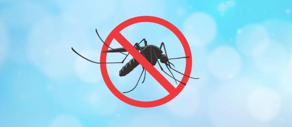 Ubatuba discute estratégia de monitoramento e combate a arboviroses