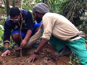 Alunos da Apae de Ilhabela realizam plantio de mudas nativas na estrada de Castelhanos