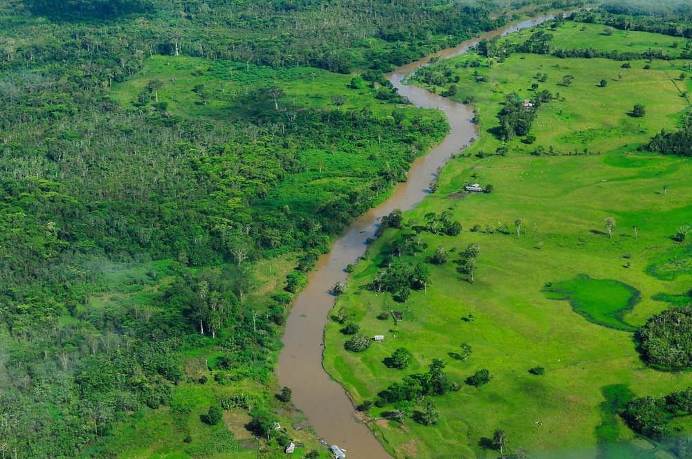 Vista aérea da Floresta Amazônica. Imagem feita próximo a Manaus. Foto: CIAT (CC)/Neil Palmer