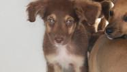 Prefeitura de Caraguá publica chamamento para credenciamento de clínicas veterinárias para castração