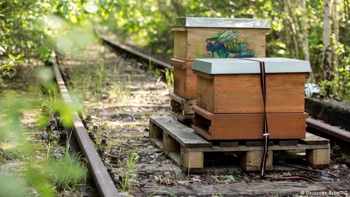 Criação de abelhas em terreno da DB em Berlim