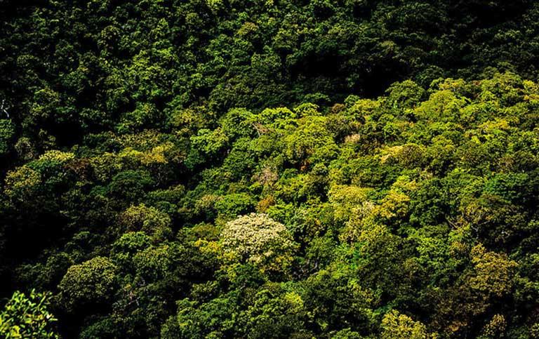 Floresta primária em Mato Grosso, Brasil. Florestas primárias são mais eficientes em estocar carbono que florestas secundárias. Crédito da foto: Paulisson Miura em Visualhunt / CC BY
